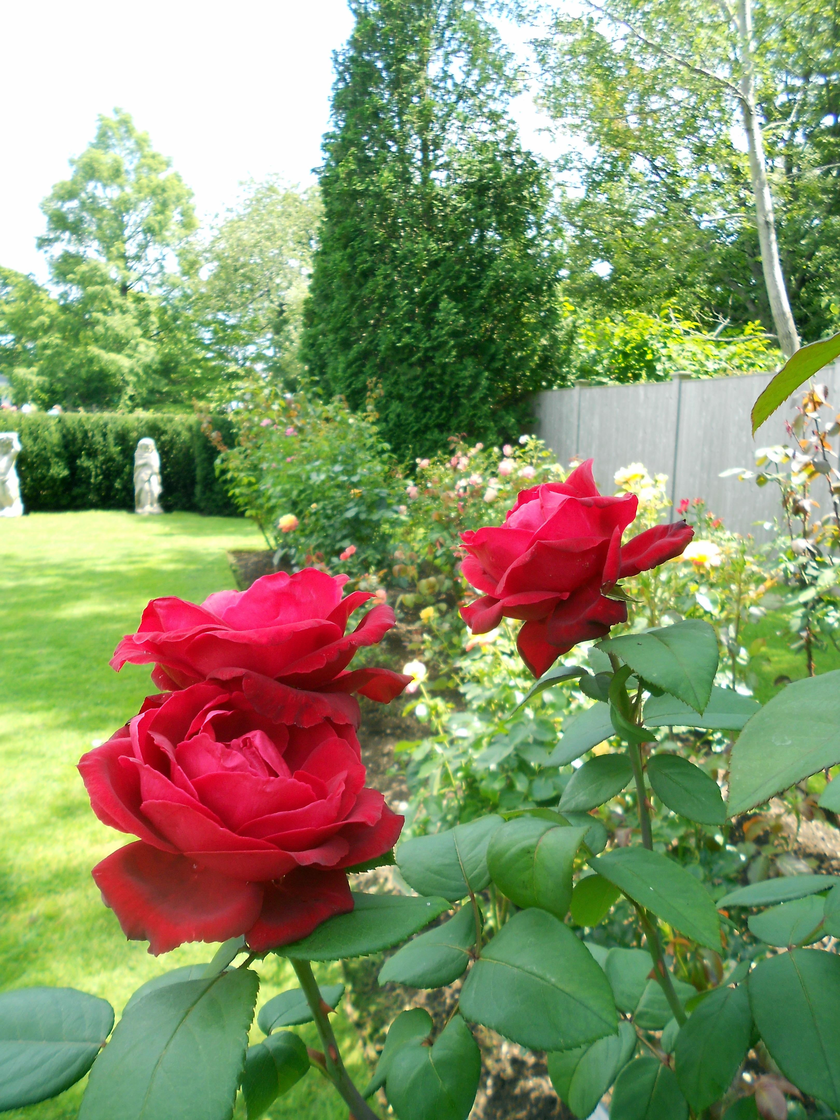 Summer Garden Toys: High Summer Gardens