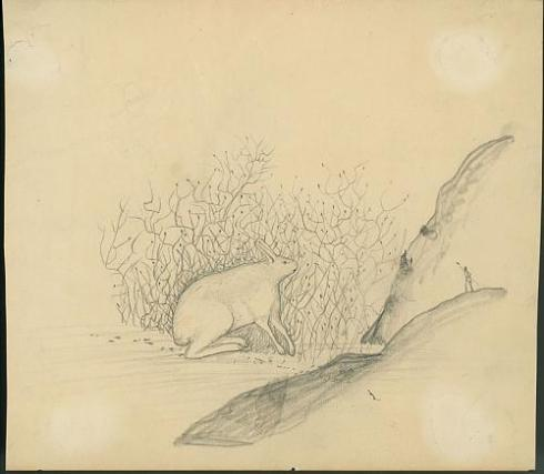 Arctic Hare 1890s Smithsonian