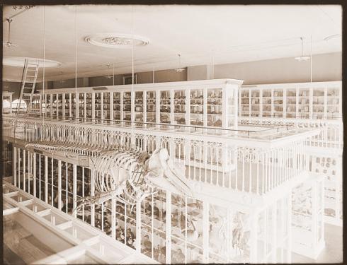 Wonder on Display Peabody Museum of Salem 1910