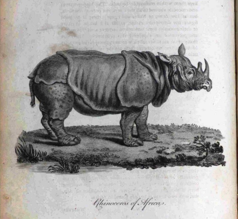 Bruce Rhinocerous croppped
