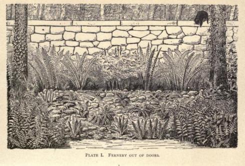 Ferns Robinson 1