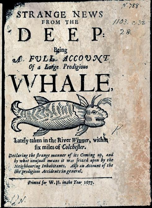 Whale 1677