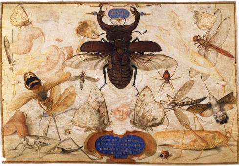 Hoefnagel Insects and the Head of a Wind God