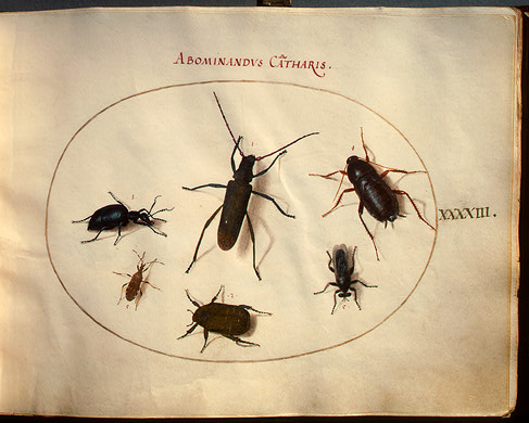 Insects Hoefnagel 2