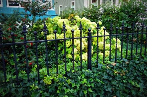 Fences 030
