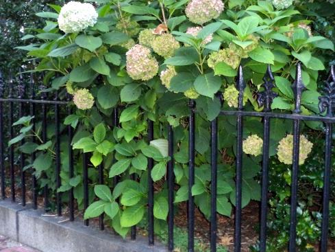 Fences 035