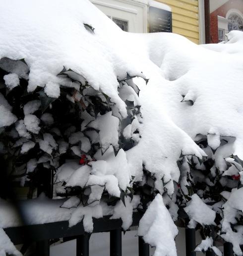 Winter 028