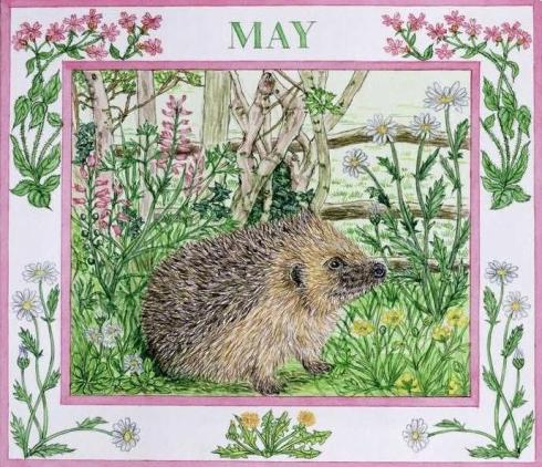 Hedgehog May-001