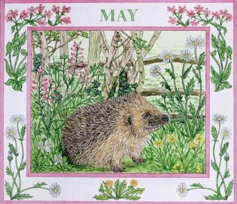 Hedgehog May-001