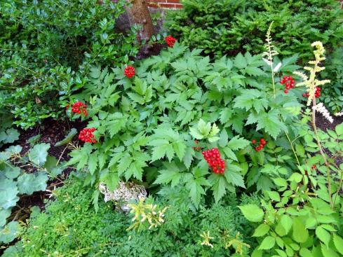 Garden 030