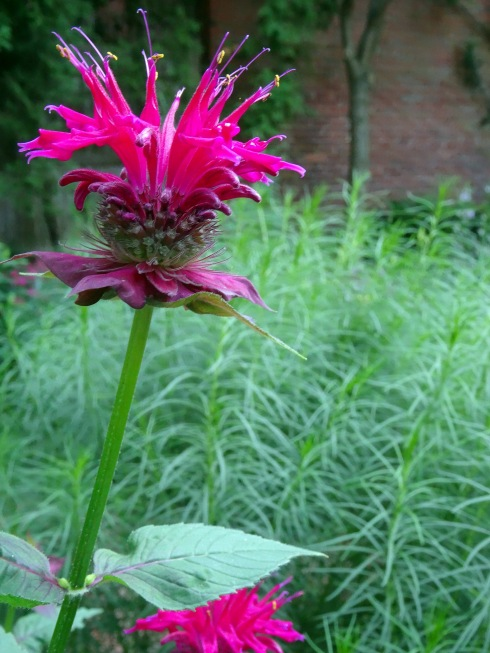 Garden 052