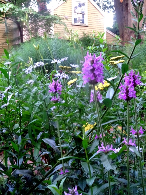 Garden 067
