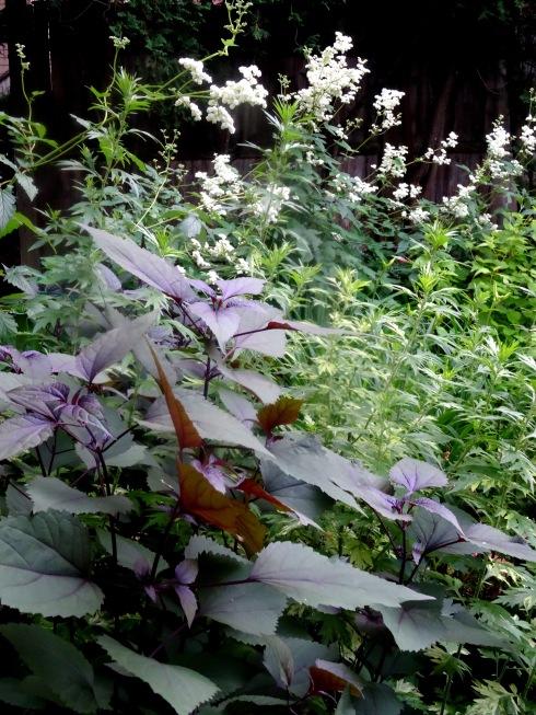 Garden 073