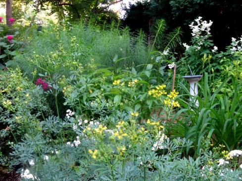 Garden 077