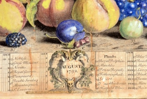 August Fruits 1732