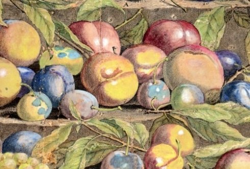 August Fruits Detail 1732