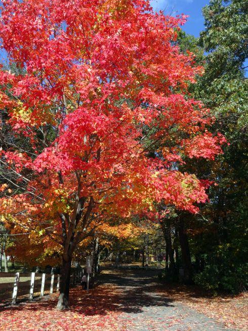 Fall Flowering 2