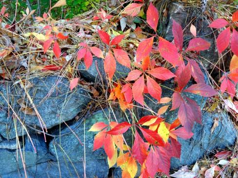 Fall Flowering 6