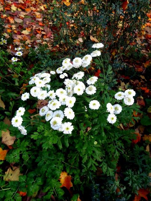 Fall Flowering 8