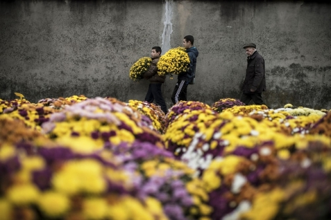 Mums for Mouring NBC News