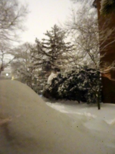 Snow again 009