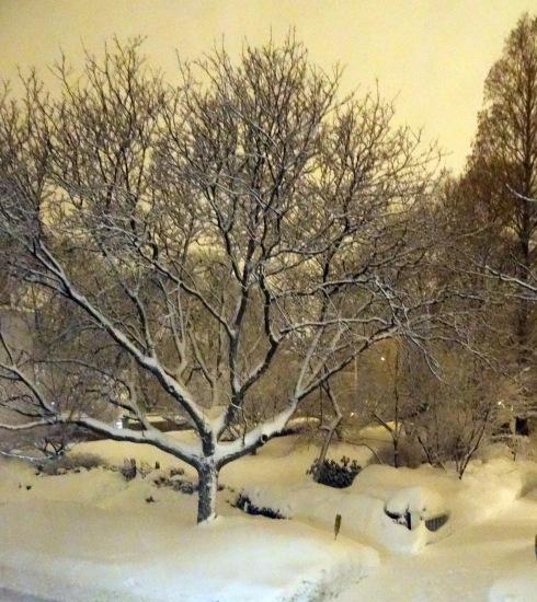 Snow again 045