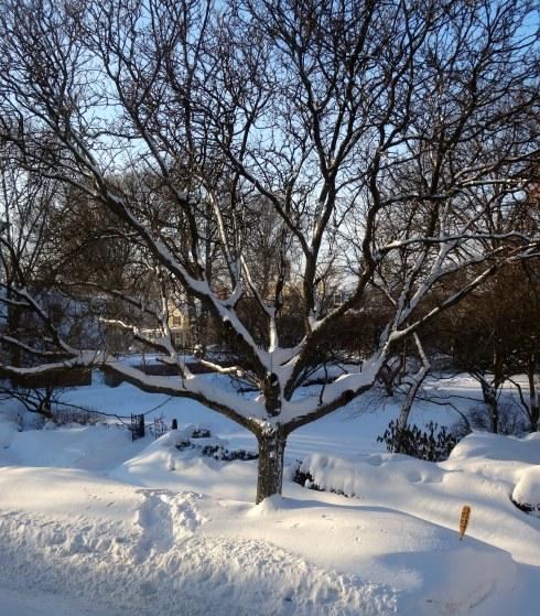 Snow again 2 006