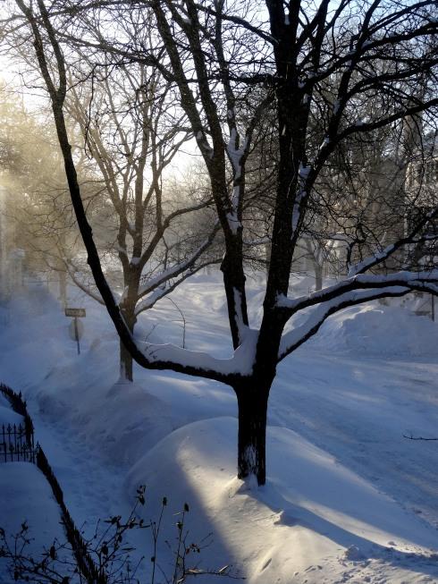 Snow again 2 012