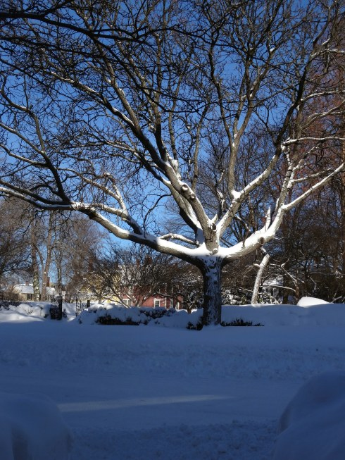 Snowbanks 005