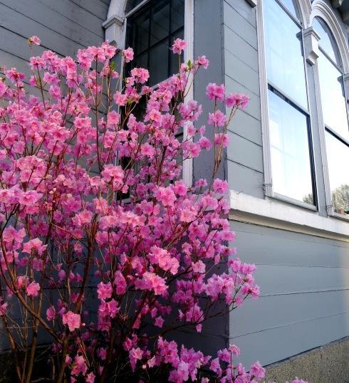 Flowering 001