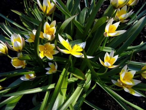 Flowering 022
