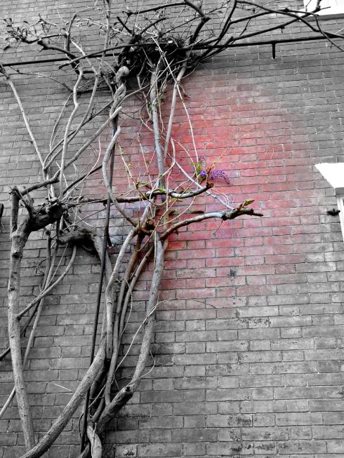 Flowering 026