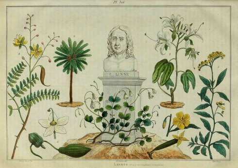Twinflower and Linnaeus Sculpture