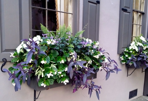 Charleston windowbox