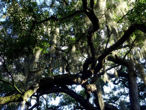 Southern Exposure 049