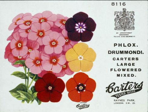 Phlox Seed Packet V and A 1930s