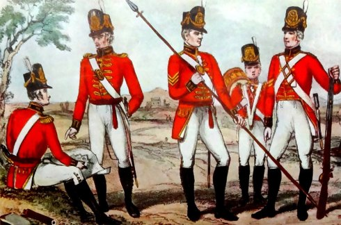 King Penguin Military Uniforms Illustration