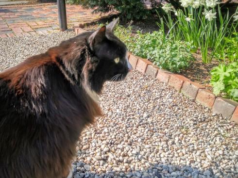 Gables Garden Cat