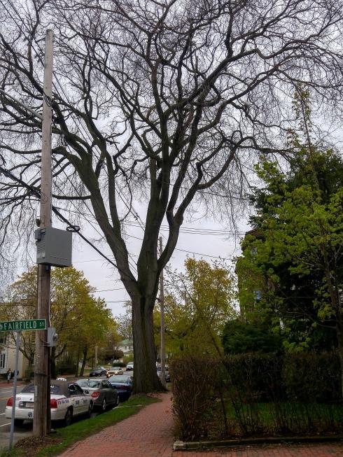 Lafayette Tree
