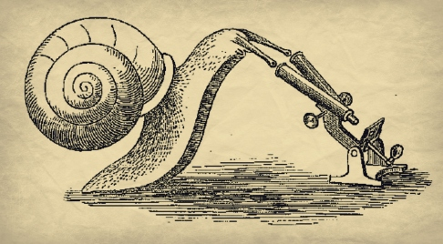Snail and Microscope