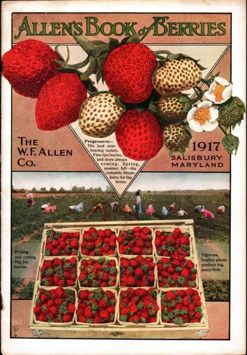 Everything for the Garden Allen 1917