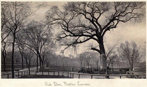 Elm Boston Common DC card 1876