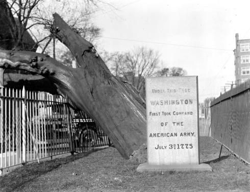 Elm Cambridge destruction 1938 Leslie Jones