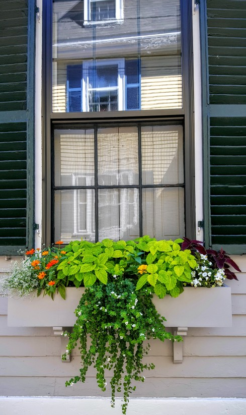 windowbox 3