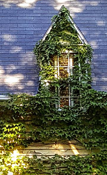fall-window-leaves
