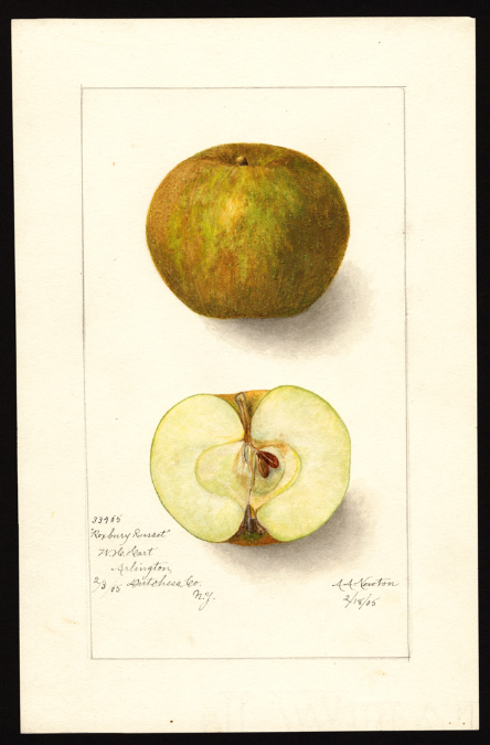 apples-roxbury-russet
