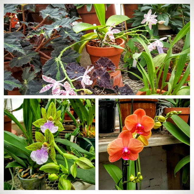 october-orchids-collage-1