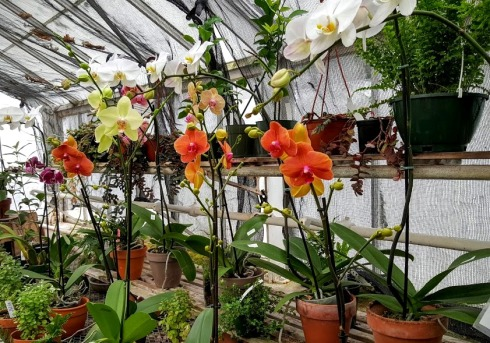 october-orchids-lyman-house-1
