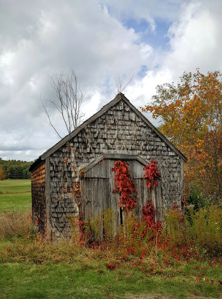 pumpkin-shed
