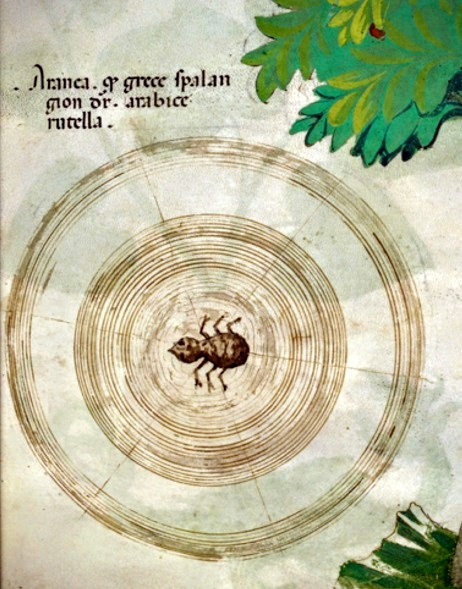 spiderweb-medieval-bl-illuminated-ms